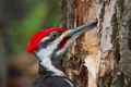Woodpecker-repellents.png