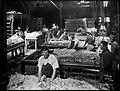 Wool sorting (2515554854).jpg