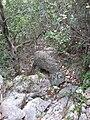 Yagur – Nesher, the Green Path – Mount Carmel 021.JPG
