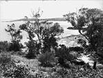 Yarra Bay, Botany (2469679278).jpg