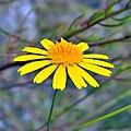 Yellow Day (5210686129).jpg