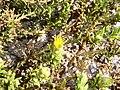 Yellow flowers (48338322451).jpg