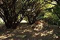 Zahrada domu bratří Čapků (Vinohrady) v roce 2015 (7).JPG
