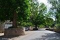(((شهمیرزاد و درختهای گردو ))) - panoramio (3).jpg