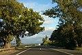 Árvore na Rodovia Presidente Castelo Branco, Porangaba - Mapillary (98WQjsp2JQlKoKi65GPZlw).jpg