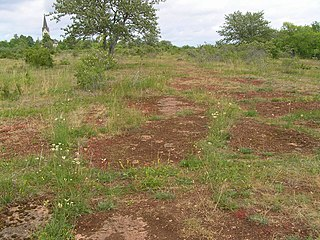 Alvar Biological environment based on a limestone plain with thin or no soil and, as a result, sparse grassland vegetation
