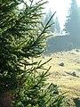 Őszi reggel a bihari fensíkon - panoramio.jpg
