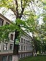 Вул. Євгена Коновальця, 13, в межах садиби школи-інтернату, Шкільний дуб.jpg