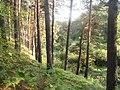 Гилевская роща. Река Ключи (Войновка) 08.JPG