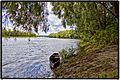 Десна возле Максима июнь 2012 - panoramio.jpg