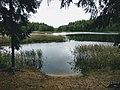 """Заказник """"Синьша"""", река Дрисса, недалеко от озера """"Пролобно"""".jpg"""