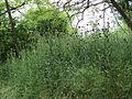 Парк шума Гази Баба во мај (162).JPG