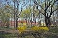 Парк імені Тараса Шевченка (Київ).JPG