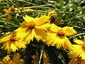 Растения в Седово 254.jpg