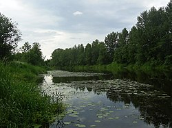 Река Селижаровка (The Selizharovka river) - panoramio.jpg