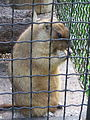 Рівненський зоопарк, 14.jpg