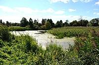 Річка в селі Перекопівка2.jpg