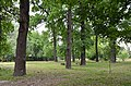 Старий дубовий гай, Солом'янський район 01.jpg