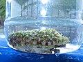 Фрагмент зеленого коралла.jpg