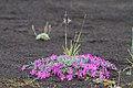 Цветы на шлаке.jpg