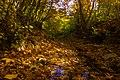 پاییزدر ایران-قاهان قم-Autumn in iran-qom 15.jpg