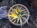 گلخانه کاکتوس دنیای خار در قم. کلکسیون انواع کاکتوس 05.jpg