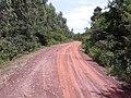 ต้นยูคาลิปตัส รอบ หนองกอมเกาะ - panoramio.jpg