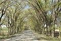 中国新疆昌吉回族自治州奇台县 China Xinjiang Qitai, China Xinjiang Uru - panoramio (17).jpg