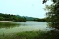 嘉陵风光之苟溪河湿地 - panoramio (5).jpg