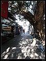 深圳中英街的老榕树 - panoramio.jpg