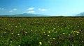 热尔大坝草原Rerdaba grassland - panoramio (3).jpg