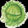 甘藍菜wildcabbage.png