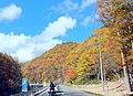 紅葉盛りのせせらぎ街道 - panoramio.jpg