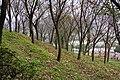 蓮華寺櫻林 Sakura Grove of Lianhua Temple - panoramio.jpg