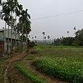 金蘭村 - panoramio (5).jpg