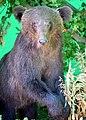 02014.0. Animals of Bieszczady.JPG
