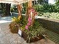 05441jfMidyear Philippine Orchid Show Quezon Memorial Circlefvf 02.JPG