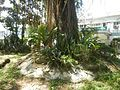 09983jfHeritage Park Bustos Tanauan Municipal Hall Bulacanfvf 04.jpg