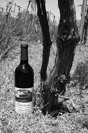 Hermann, Missouri - A bottle of Norton wine sits next to what is believed to be a 170-year-old Norton/Cynthiana grapevine cultivated by American wine legend George Hussman. The vines, which still produce grapes, are now part of OakGlenn Winery's vineyard.