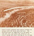 """1957 """"DDT mixed with fuel oil"""" - Highlights -Pacific Northwest Region, U.S. Department of Agriculture, Forest Service (IA CAT30959945) (page 7 crop).jpg"""