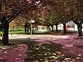 2011-04-13-120726 49,418037, 8,669243.JPG - panoramio.jpg
