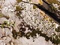 20121027 0757 Sintra 29.jpg