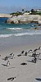 2013-02-17 15-12-55 South Africa - Simon'S Town Seaforth 5h.JPG