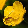 2013-06-09 16-32-19-spider.JPG