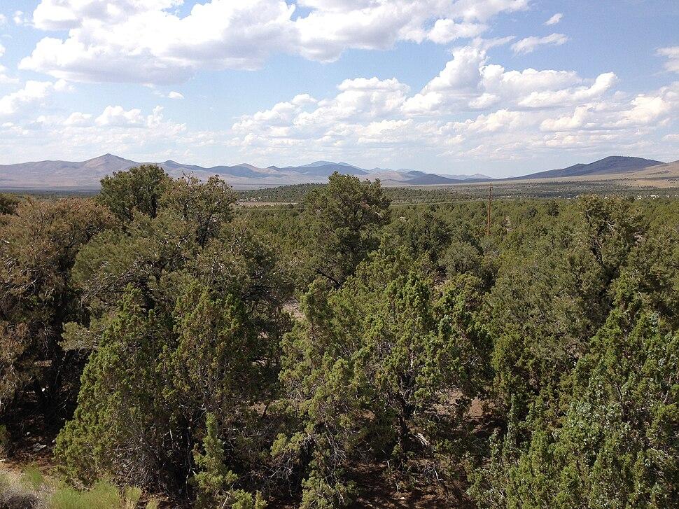 2013-07-04 15 06 01 Singleleaf Pinyon-Utah Juniper woodland along Interstate 80 east of Wells in Elko County in Nevada