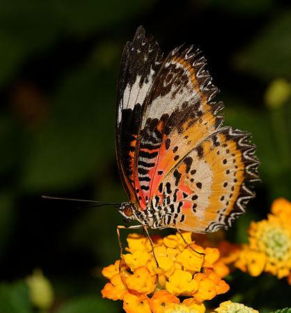 2015-10-24 13-08-20 papillon-hunawihr.jpg