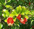 2015 06 Rote Blume1.JPG