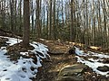 2016-02-08 13 47 24 View north along the Gerry Connolly Cross County Trail between Vale Road and Lawyers Road in Oakton, Fairfax County, Virginia.jpg