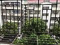 2018 super typhoon Mangkhut in Shenzhen 3.jpg
