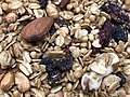 2020-08-31 20 09 23 A sample of Aurora Natural Forest's Bounty Trail Mix & Granola (Grail Mix) in the Franklin Farm section of Oak Hill, Fairfax County, Virginia.jpg